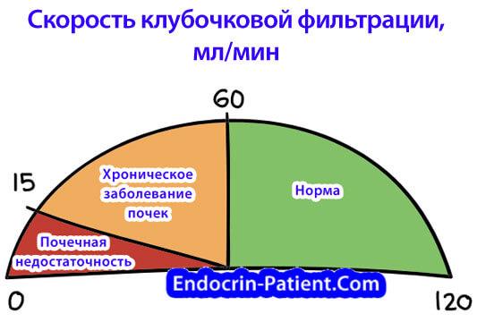 Скорость клубочковой фильтрации почек